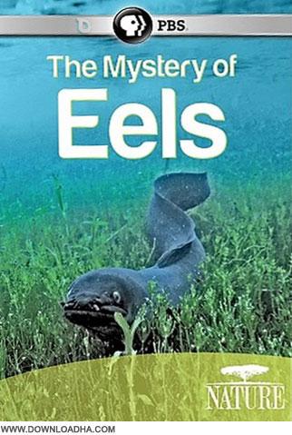 Eels دانلود مستند اسرار مارماهی ها The Mystery of Eels