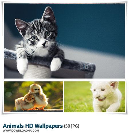 Animals HD Wallpapers S1 مجموعه ۵۰ والپیپر با کیفیت از حیوانات Animals HD Wallpapers