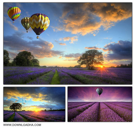Fields and ballons مجموعه 6 تصویر استوک با عنوان Lavender Fields and ballons