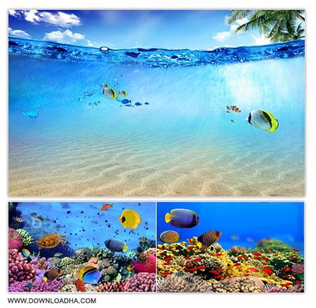 Underwater World تصاویر استوک با موضوع زیر دریا Stock Photo   Underwater World